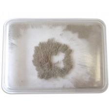 Pilitură de fier în cutie ermetică