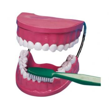 Model demonstrativ de îngrijire dentara